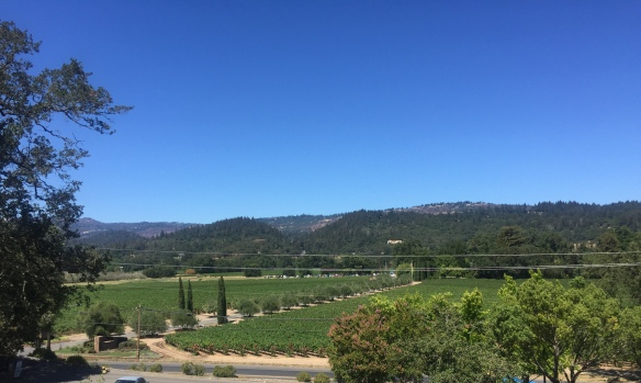 Why do people love to wine and dine in Napa Valley? Perhaps, the answer is in the lush greenery of the vineyards.